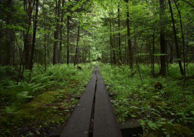 Chemin de planches de bois dans la forêt